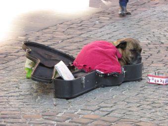 Perro laburando mientras el dueño tocaba la viola